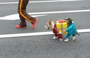 веселая мода для собак