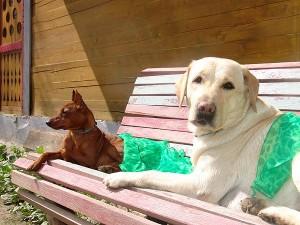 собаки в Израиле