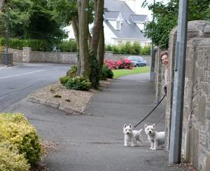 собаки в Ирландии