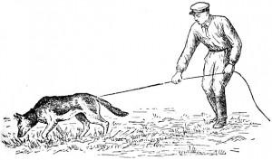 история сыскного собаководства