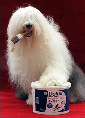 краски Dulux