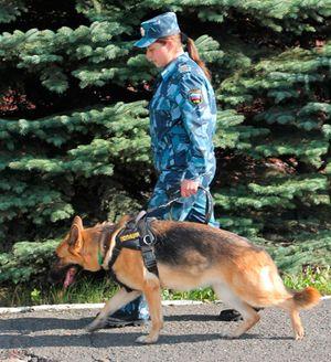 красноярская форма полицейских собак (осенний вариант)