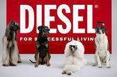 реклама очков Diesel с участием собак