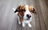 самые популярные породы сторожевых собак