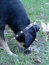 собака ест землю