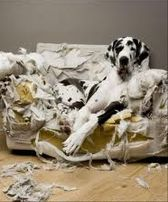 собака одна дома