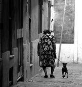 собаки для пожилых людей