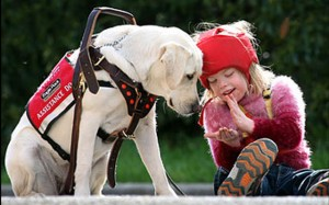 собаки-предсказатели эпилептических припадков