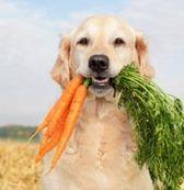 собачьи витамины