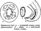 спироцеркоз