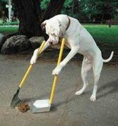 уборка экскрементов за собакой