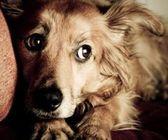 Почему боится собака? Часть 1