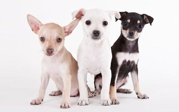 Все собаки мечтают о добром хозяине