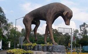 Дрессировка собак в тюмени адреса