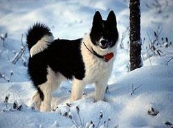 10 декабря 2010 категории породы собак