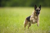 Чем заняться летом с собакой?