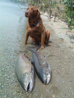 Рыбалка с собакой