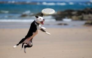 Как обучить собаку фризби