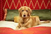 Собака в отеле