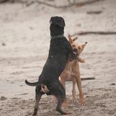 Как защититься от чужой собаки?
