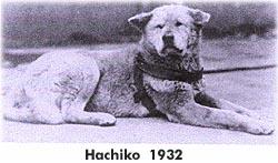 Хатико, 1932 год
