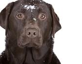 Как помочь собаке при переохлаждении?