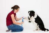 Первая помощь собаке при механических повреждениях