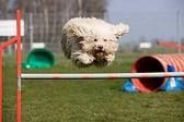 Прыжок через барьер