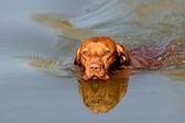 Как приучить собаку купаться