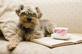 Как накормить капризную собаку?
