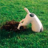 Зачем собаки роют землю?
