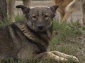 ссуд США заменил смертную казнь пса пожизненным заключением