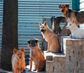 Приют для собак в Гусь-Хрустальном