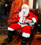 Новогодние собачьи новости