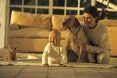 Как снять квартиру с собакой?
