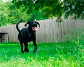 Собака лает под забором