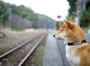 Правила провозки собак в поезде