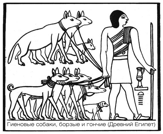 Собаки в Египте