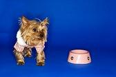 Питание миниатюрной собачки