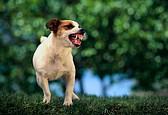 Что делать, если укусила собака?