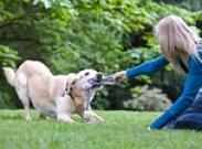 10 правил игр с игрушками. Как выбрать игрушку собаке?