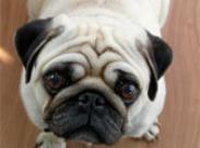 Нужна ли вашей собаке диета?