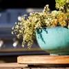 Какие комнатные растения опасны для собак?