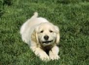 Что хочет сказать вам ваша собака?