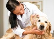 Когда нужно вызывать ветеринара на дом? За и против. Признаки того, что ветеринар необходим