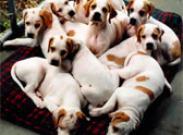 Что нужно спросить у заводчика, у которого покупаете щенка?