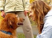 «Услышь меня», или Как понять язык собак