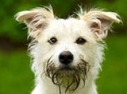 Нездоровое поведение собаки: как бороться