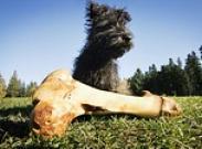 «Фу!» или Как отучить пса подбирать с земли еду
