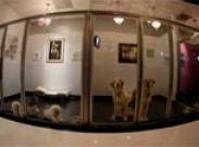 Советы профессионала: как выбрать гостиницу для собаки? (часть 1)